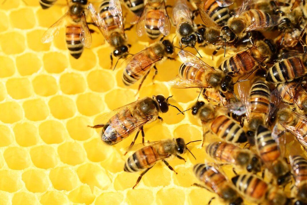 Pszczoły na wyginięciu